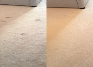 Carpet Cleaners Swindon and Bristol