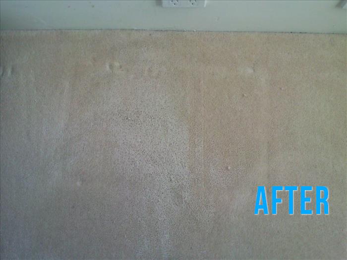 Euro Carpet Cleaning Bristol